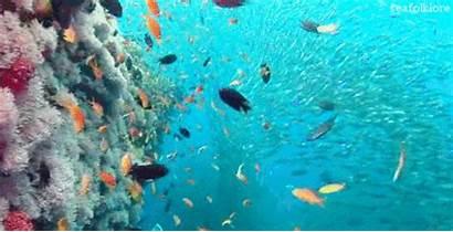 Reef Coral Underwater Gifs Gfycat Lowgif