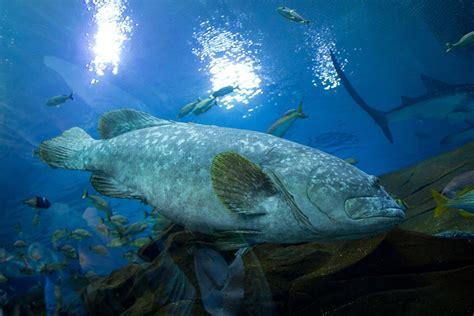 grouper gag season wakulla county