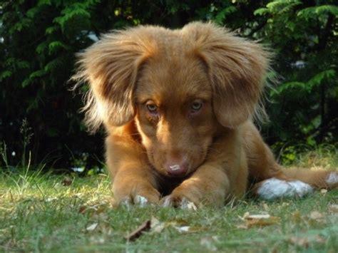 kan jullie hond ook zo zielig kijken foto topic pagina 4 hondenforum