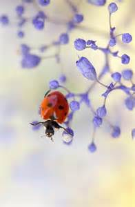 Blue Ladybug On Flower