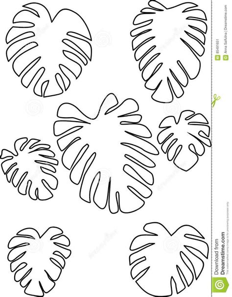 outline drawing monstera leaves tropical plant