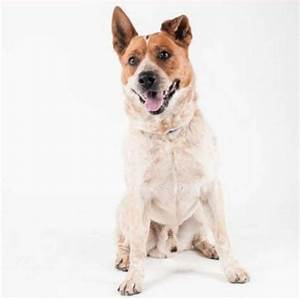 Adorable and adoptable pets in SF animal shelters