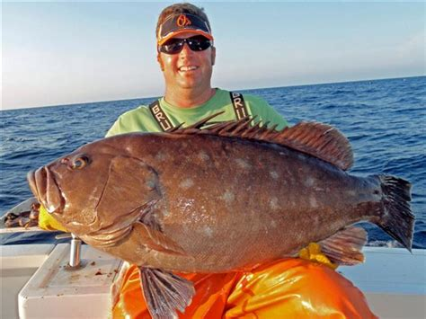 grouper state record virginia snowy saltwater fishing va chesapeake burnley norfolk canyon tournament bay records lands near beach shattered broken
