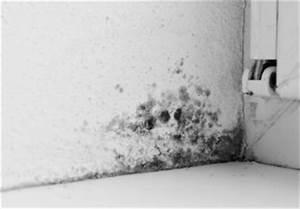 Feuchte Wände Was Tun : schimmel nach wasserschaden was tun ~ Michelbontemps.com Haus und Dekorationen