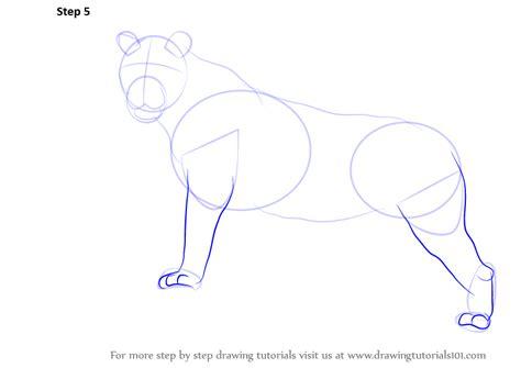 step  step   draw  tiger drawingtutorialscom
