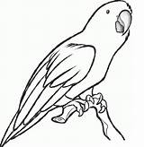 Parrot Coloring Pages Printable Animal sketch template