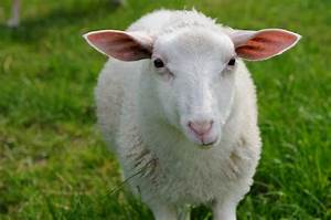 20 Beautiful animal pictures (20 pics) | Amazing Creatures  Animal