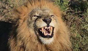 Borne Free Lyon : born free foundation sa support for lion bones trade i ~ Medecine-chirurgie-esthetiques.com Avis de Voitures