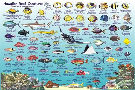 hawaiian reef creatures camping babble