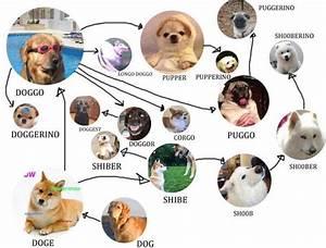 Doggo Chart