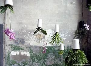 Hängende Pflanzen Aussen : flowerbox pflanzenbilder f r die wand wohnen hausxxl wohnen hausxxl ~ Sanjose-hotels-ca.com Haus und Dekorationen
