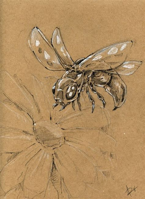 Original Sketch Insect By Artisandream On Etsy, $1000