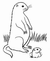 Groundhog Coloring Cartoon Realistic Marmotte Alabama Clip University Clipart Coloriages Groundhogs Sheets Animaux Coloriage Yahoo Library Popular Getcoloringpages sketch template