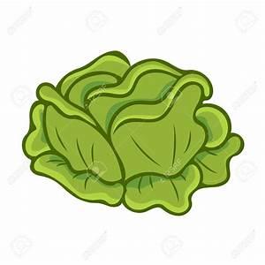 Cabbage Clipart Repolyo