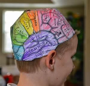 Brain hats (cerebral cortex)   Nervous System Homeschool ...