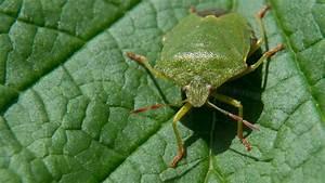 Mückennester In Der Wohnung : nach langem sommer sind viele wanzen unterwegs ~ Watch28wear.com Haus und Dekorationen