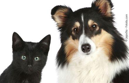 immunsuppressive therapie bei hunden und katzen