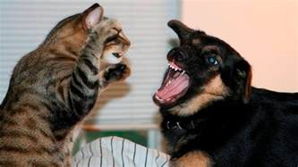 cats and dogs cats and dogs part 7 cats vs dogs