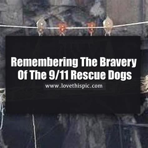 remembering  bravery    rescue dogs