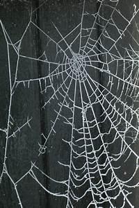 Spinnen rondom huis bestrijden: duurzame