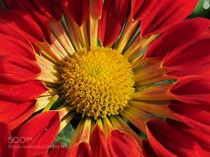 Macro Photography   Fower By Kevinkj0825