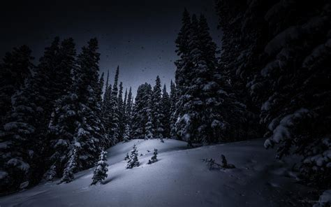 night snow tree forest christmas tree winter hd wallpaper
