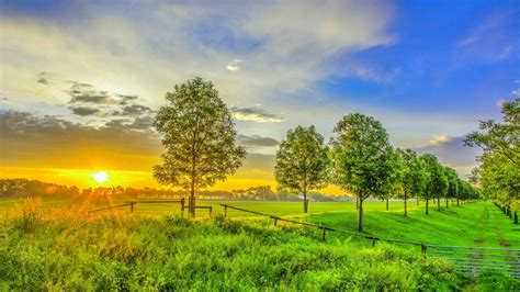 nature field green grass trees sky hd wallpaper