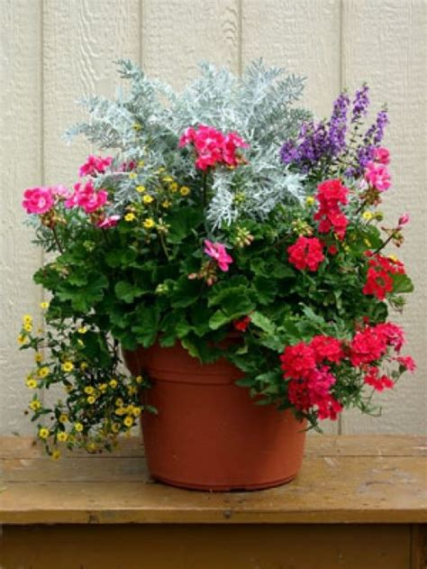 outdoor potted plants sun outdoor container gardening planting a beautiful pot of flowers
