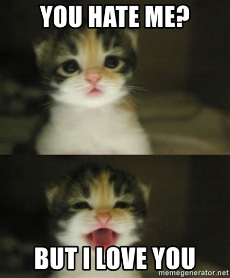 But I Love You Meme - you hate me but i love you adorable kitten meme generator