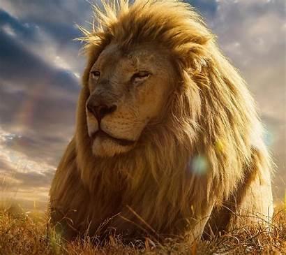 Lion Happy Animals Desktop Wallpapers Background Screen