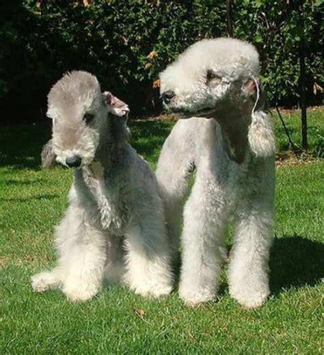 strange  unusual dog breeds