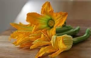 Squash Blossom Flower