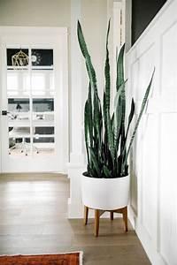 Pflanze Für Dunkle Räume : one room challenge feminine homes decor ~ A.2002-acura-tl-radio.info Haus und Dekorationen