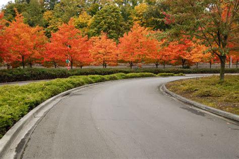 trees  driveways