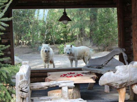 chambre zoo dormez aux loups et aux ours polaires maisonapart