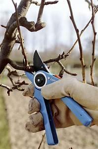 Comment Tailler Un Pommier : bien tailler un pommier jardin ~ Dode.kayakingforconservation.com Idées de Décoration