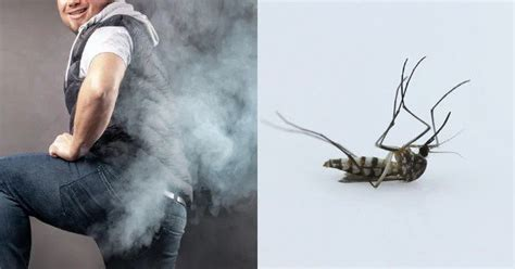 internet discovered man kill mosquitoes lethal farts