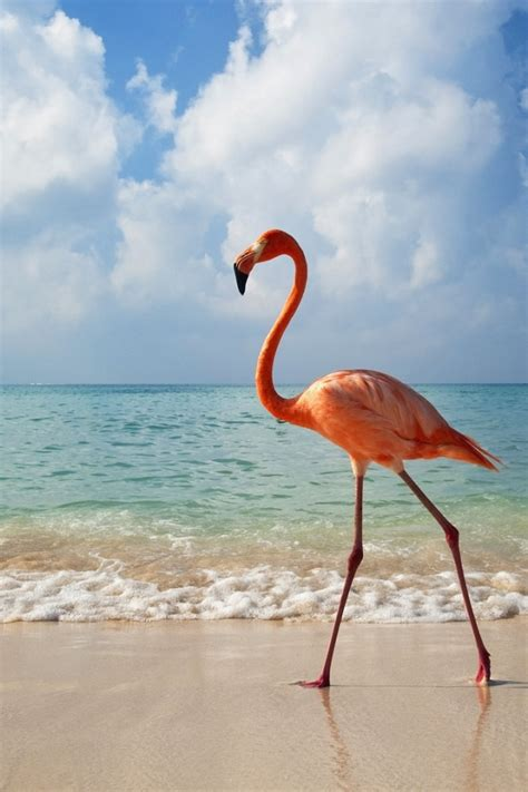 flamingo wallpapers images  pictures backgrounds