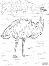 Emu Coloring Pages Realistic Animals Printable Birds Drawing Animal Bird Sheet Australia Supercoloring Australian Drawings Super Adult Ausmalbilder Paper Parakeet sketch template