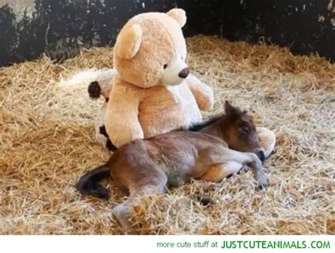 Cute Baby Animals Horse