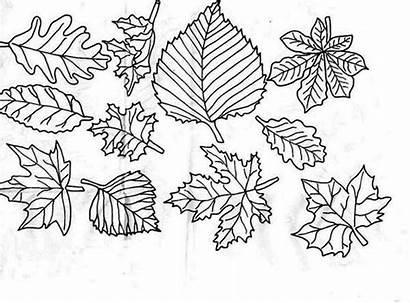Coloring Fall Leaf Autumn Netart