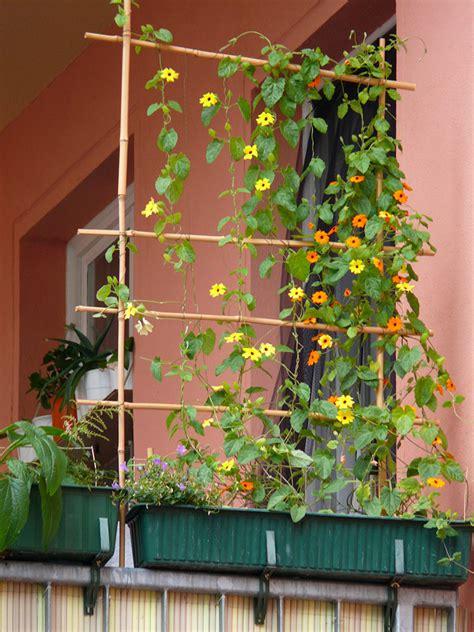 Pflanzen Für Pergola by Rankgitter F 227 188 R Balkon Images Timberra Hochbeet