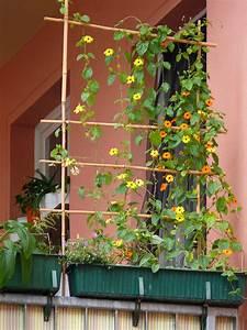 Bambus Auf Balkon : rankhilfen rankgitter aus bambus ~ Michelbontemps.com Haus und Dekorationen