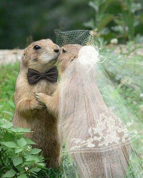 animals wedding xcitefunnet