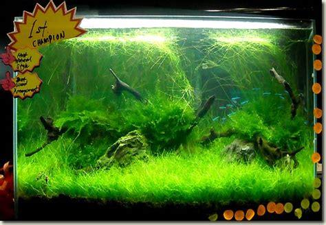 Aquascape Malaysia aquascape contest in malaysia aquapress bleher