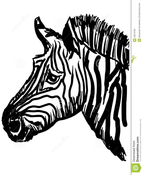 Zebra Stock Vector Image 43214795