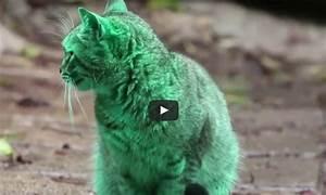Kann Der Vermieter Katzen Verbieten : was ist das geheimnis der gr nen katze aus liebe zum haustier ~ Buech-reservation.com Haus und Dekorationen