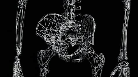 rotation   skeletonhipbonepelvispelvicanatomy