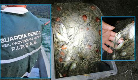pesca  frodo  alto lago nella rete pesci  soli