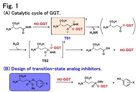gamma glutamyl transferase ggt normal range blood test gamma gt normal range 28 images ggt science library healtheiron affordable iron